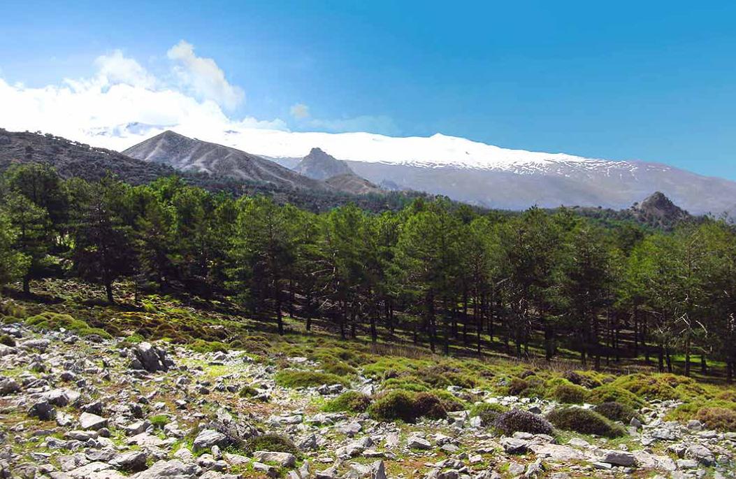 Cerro-Huenes-1