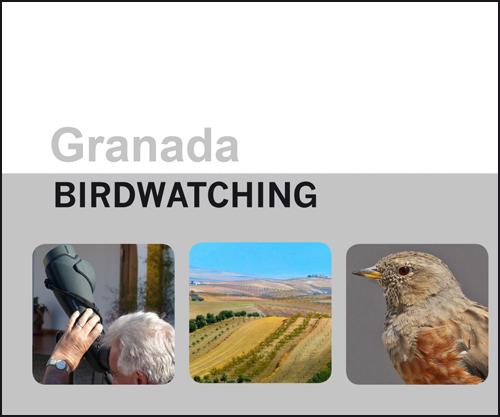 birdwatching4